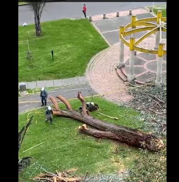 Tala de árbol en el Salitre Oriental